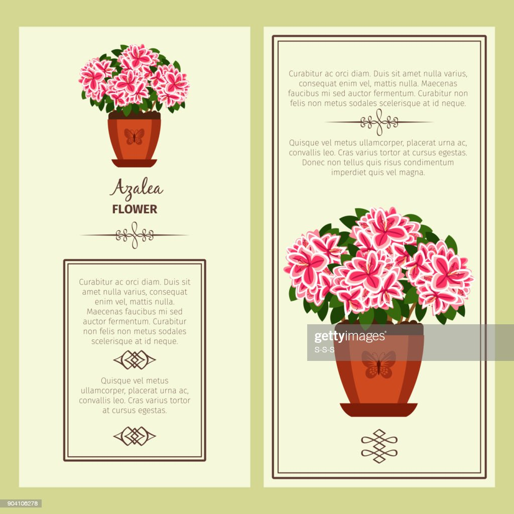 Azalea flower in pot banners