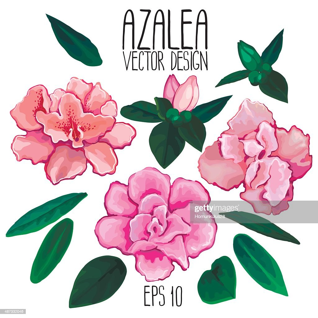 Azalea flowers and leaves collection