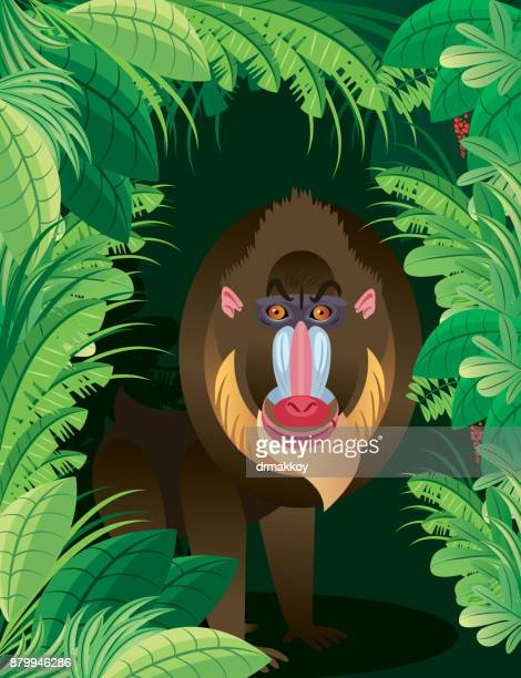 baboon - baboon stock illustrations