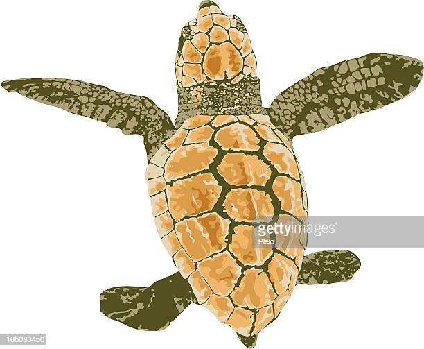 baby loggerhead turtle illustration - sea turtle stock illustrations