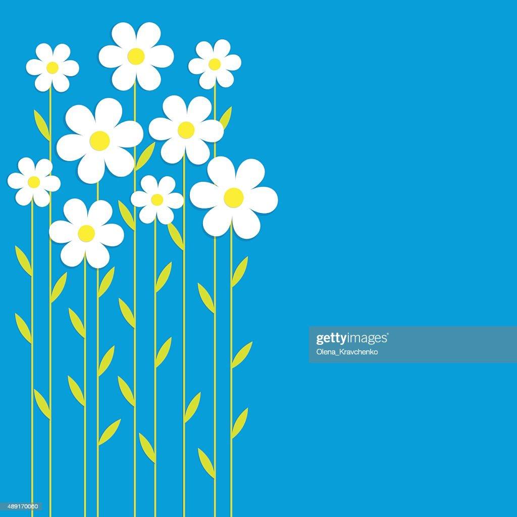 Background chamomile