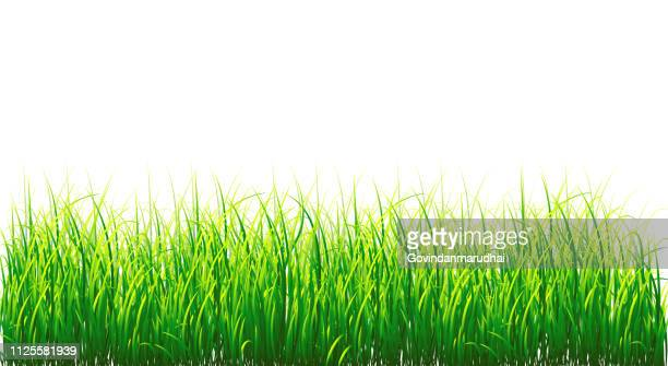 background vector grass border, isolated on white - gras stock illustrations
