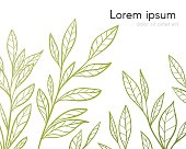 Background with border from green tea plant
