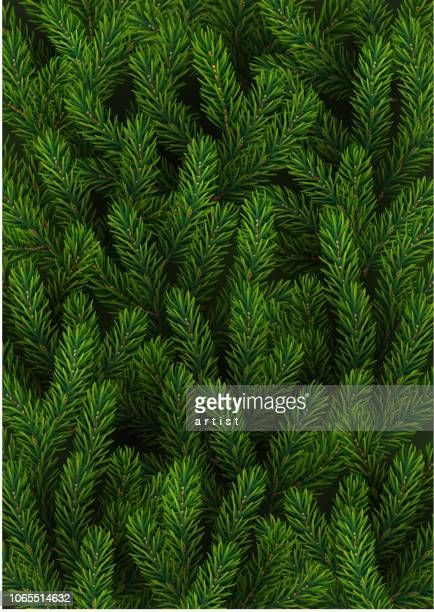 background with fir tree - spruce tree stock illustrations