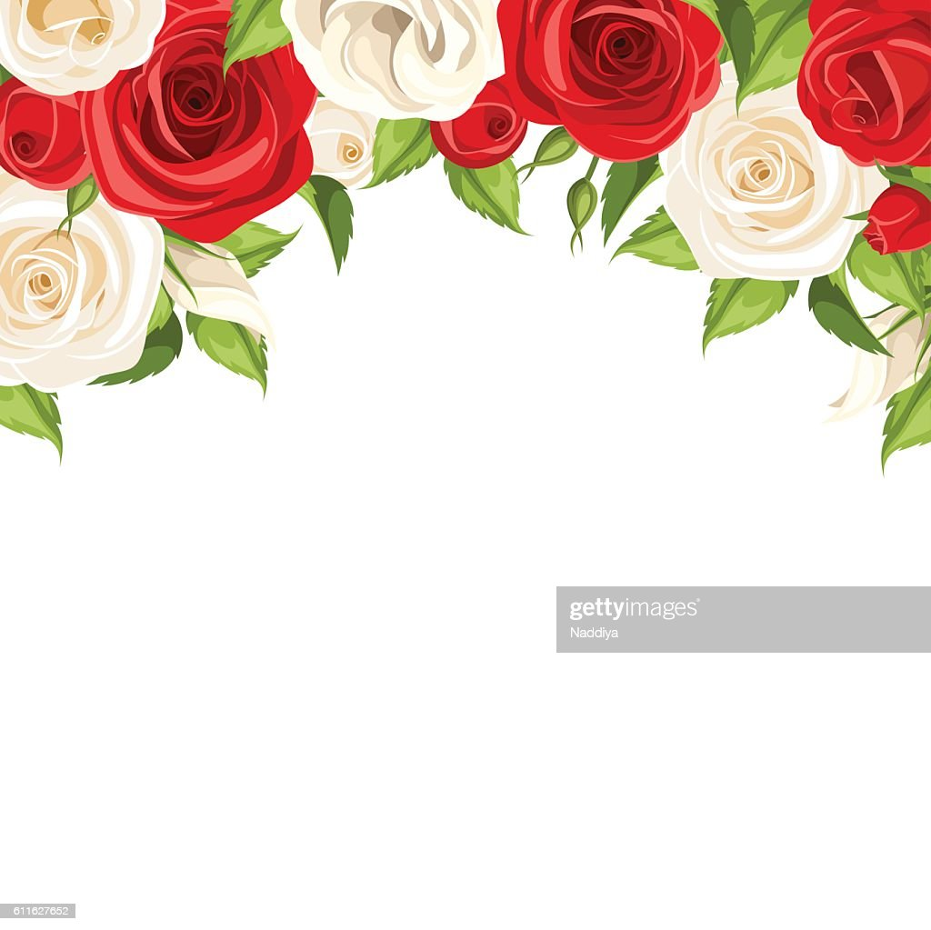 Background with red and white roses. Vector illustration.