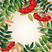 Background with rowan berries and leaves.