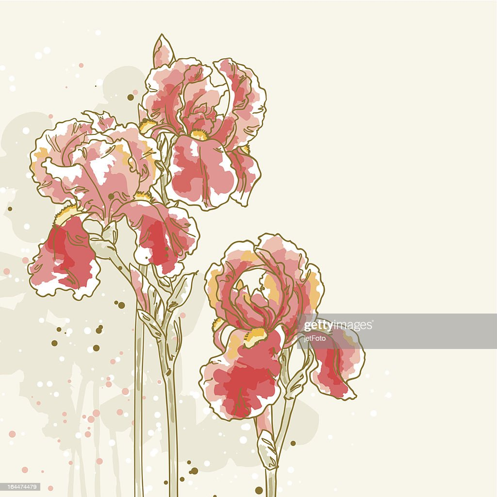 Background With Three Red Iris Flowers Vector Art Getty Images