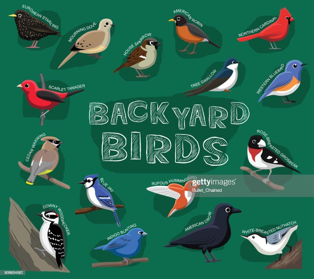 Backyard Birds Cartoon Vector Illustration