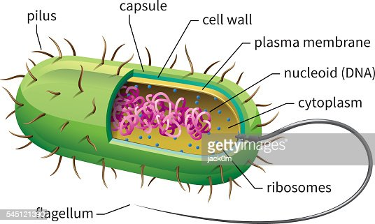 Bacteria cell vector art getty images ccuart Choice Image