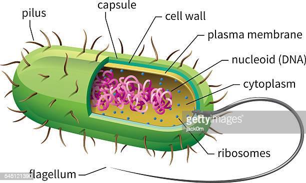 illustrazioni stock, clip art, cartoni animati e icone di tendenza di cellula batteri - cellula