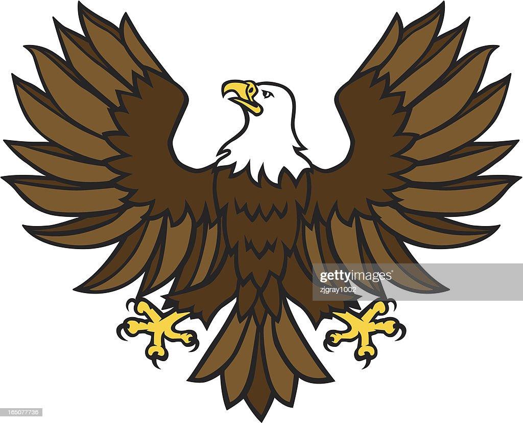 Bald Eagle - Displayed