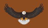 Bald Eagle flying, Vector illustration