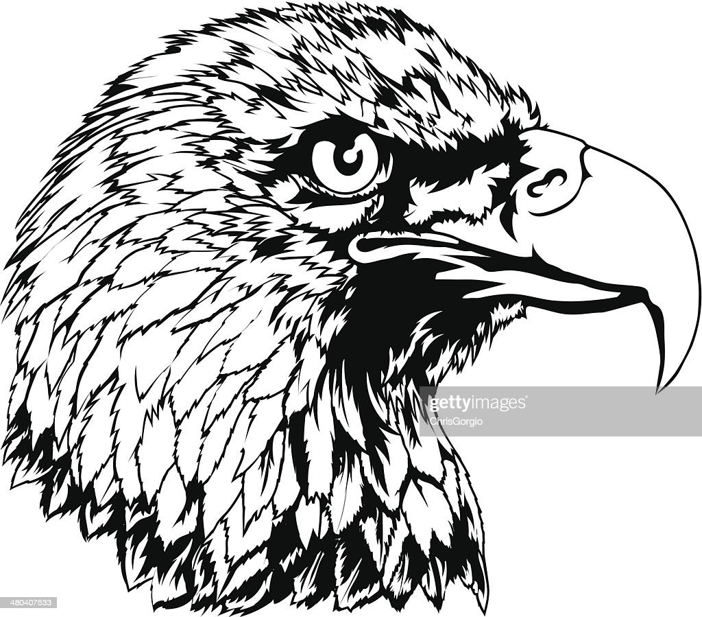 Bald Eagle Head Illustration