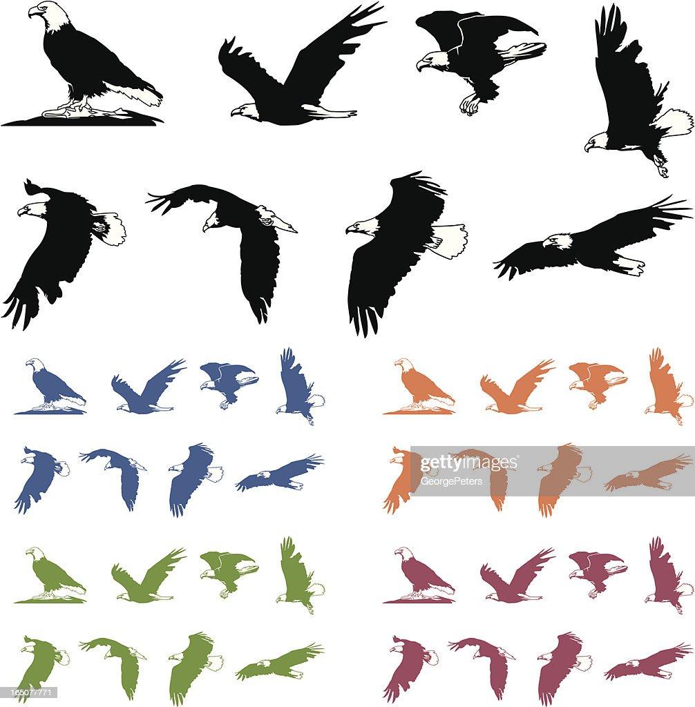 Bald Eagle Silhouettes : stock illustration
