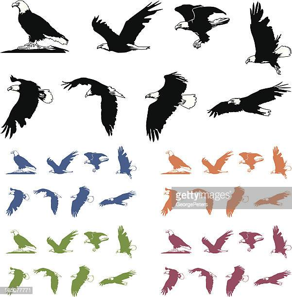 bald eagle silhouettes - talon stock illustrations