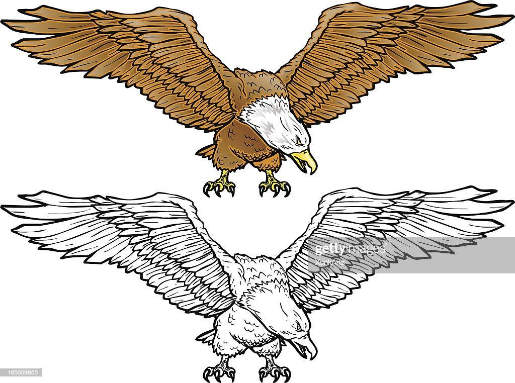 Bald Eagle Spread