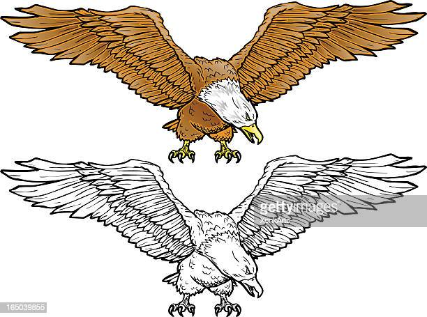 bald eagle spread - spread wings stock illustrations