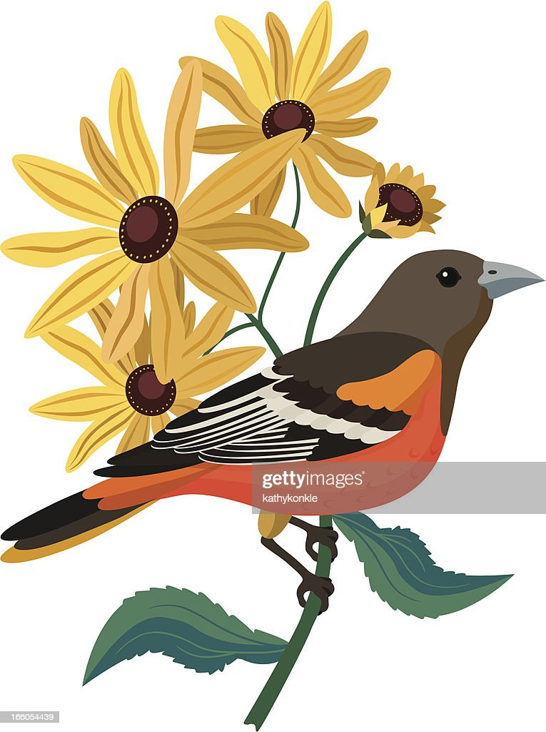 Baltimore Oriole And Black Eyed Susans