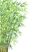 Bamboo branches, vector illustration with copy space.