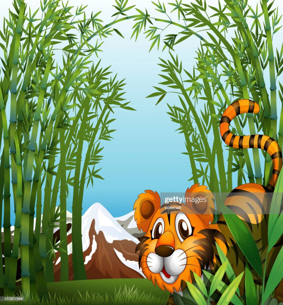 Bamboo forest with a tiger