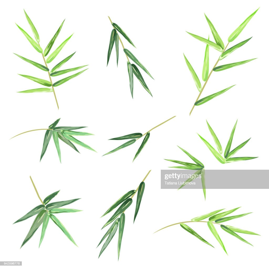 Bamboo leaves, set of vector sketches.