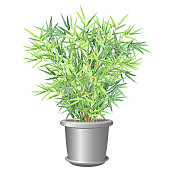 Bamboo plant in pot, vector illustration.