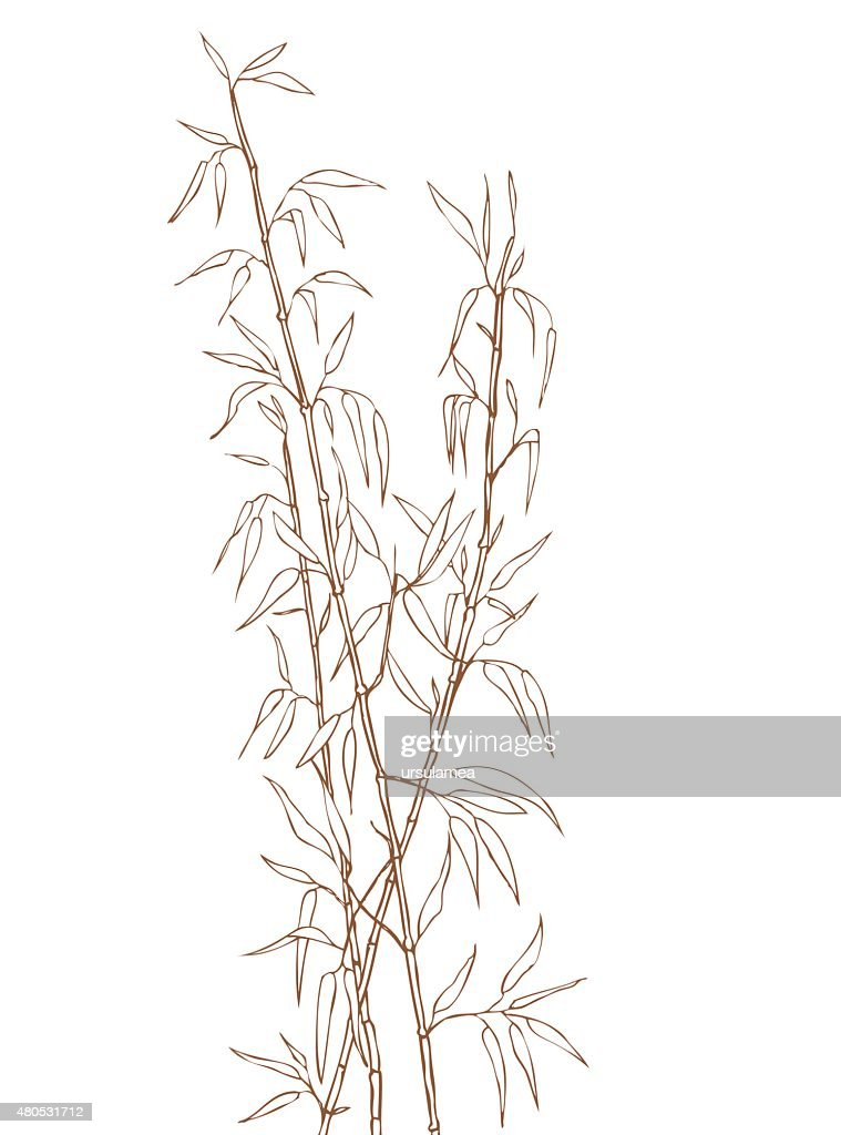 Bamboo shoots : Vector Art