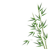 Bamboo sprouts, vector illustration.