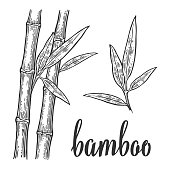 Bamboo trees white silhouettes and black outline on red circle. Hand drawn design element. Vintage vector engraving illustration for logotype, poster, web. Isolated on white background