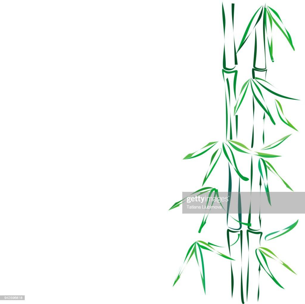 Bamboo, vector sketch.