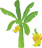 banana tree vector cartoon