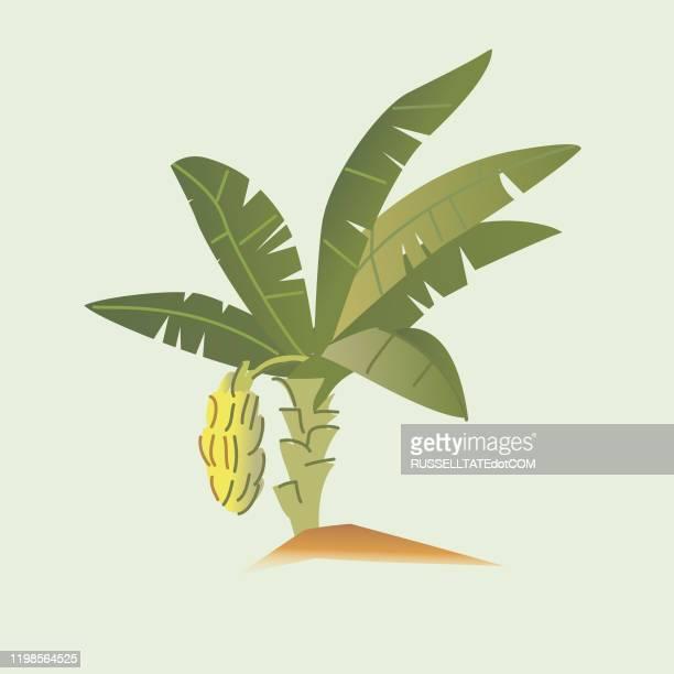 ilustrações de stock, clip art, desenhos animados e ícones de banana tree - folha de bananeira