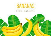 Bananas and tropical palm leaves, dense jungle. Vector illustration with tropic motif. text 100 percent natural