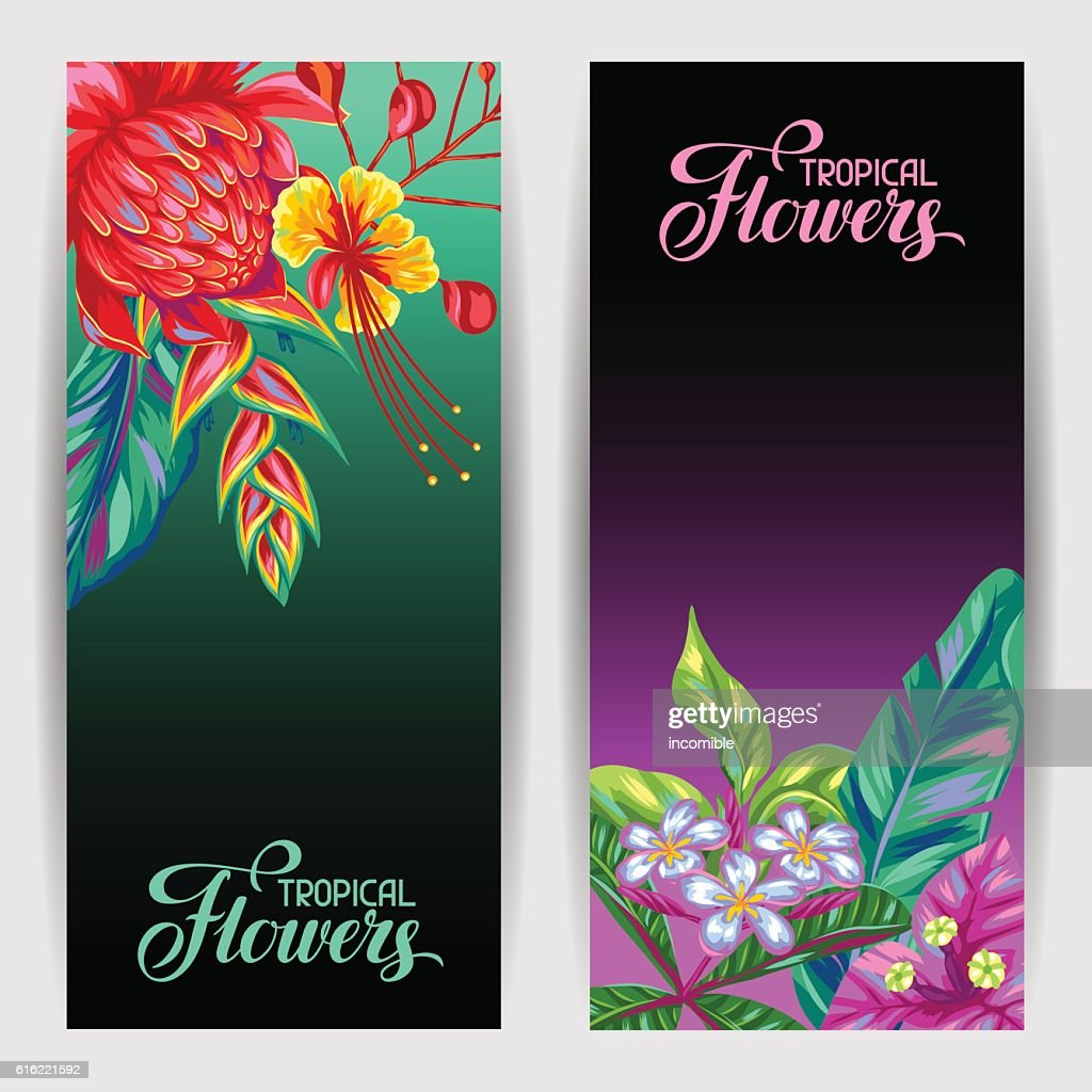 Banners with Thailand flowers. Tropical multicolor plants, leaves and buds : Vector Art