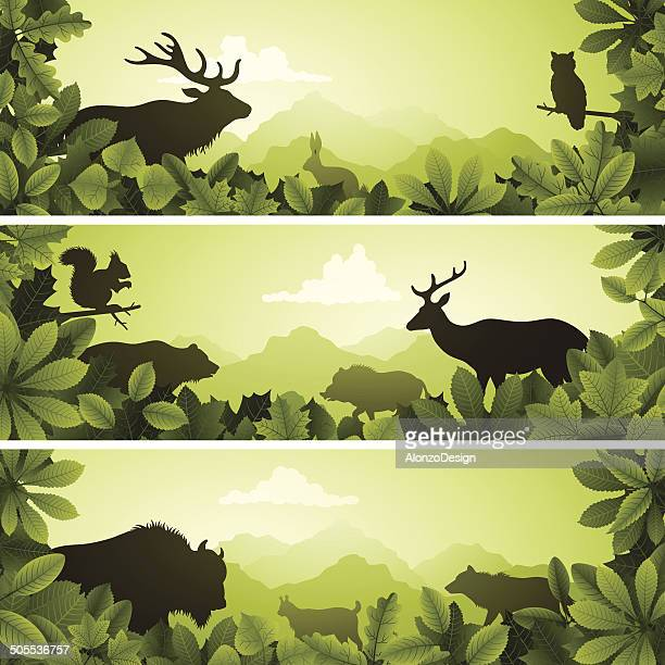 banners with wild animals - european bison stock illustrations, clip art, cartoons, & icons