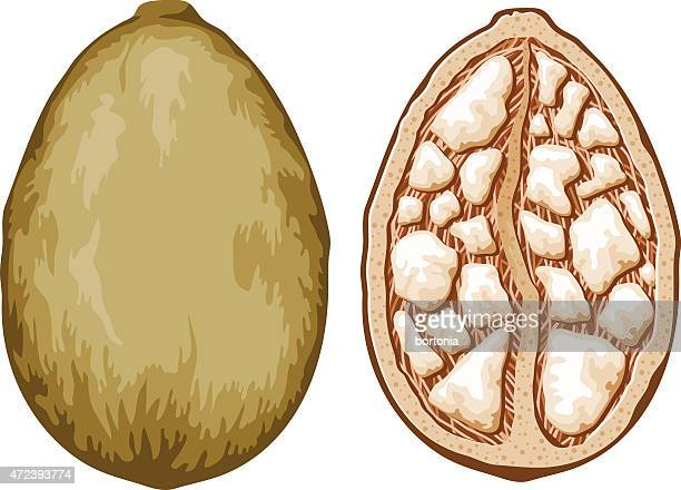 illustrations, cliparts, dessins animés et icônes de baobab adansonia de fruits - baobab