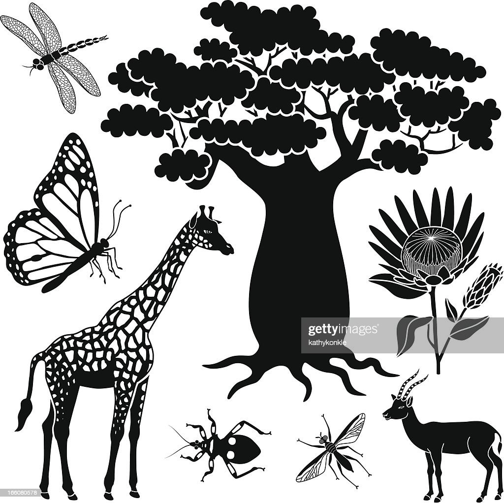 baobab tree, giraffe, gazelle and insects