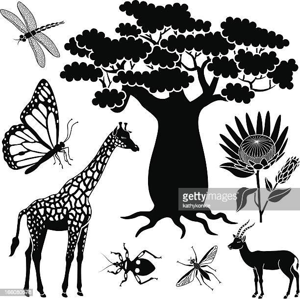 baobab tree, giraffe, gazelle and insects - assassin bug stock illustrations, clip art, cartoons, & icons