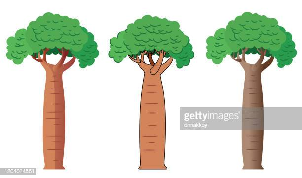 illustrations, cliparts, dessins animés et icônes de arbre de baobab - baobab