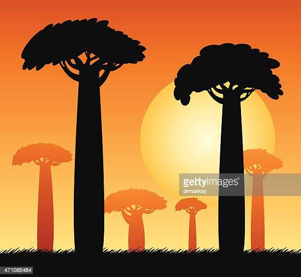 baobab tree - lemur stock illustrations, clip art, cartoons, & icons