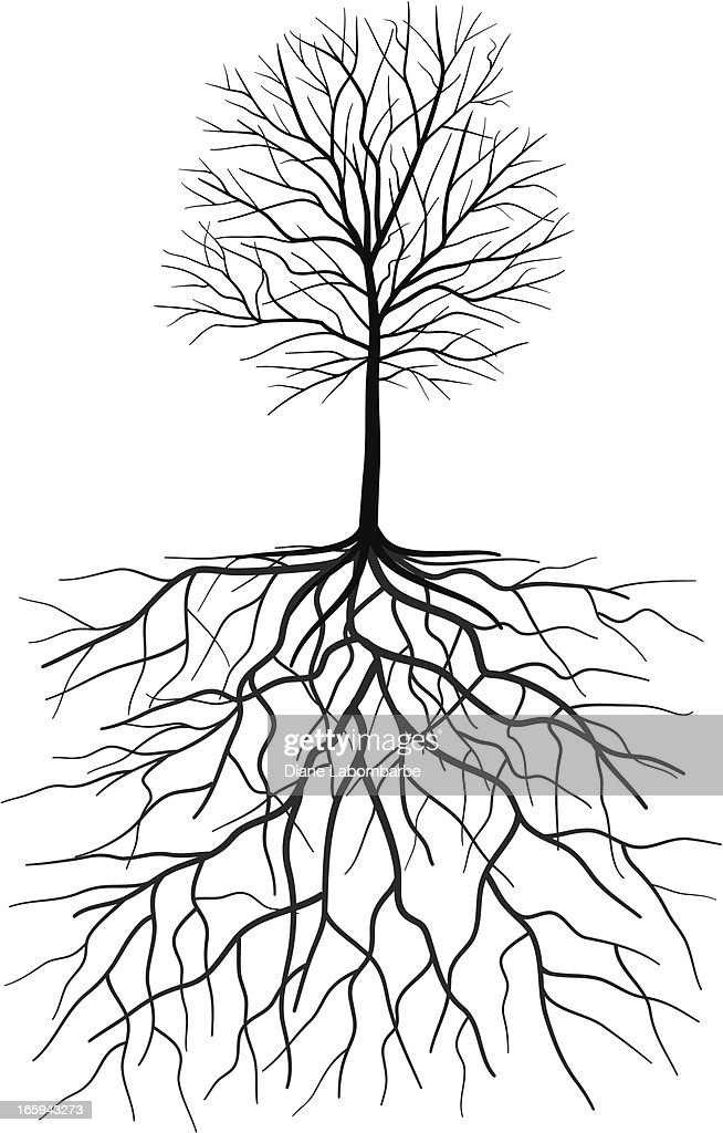 Bare Tree Silhouette With Roots Illustration