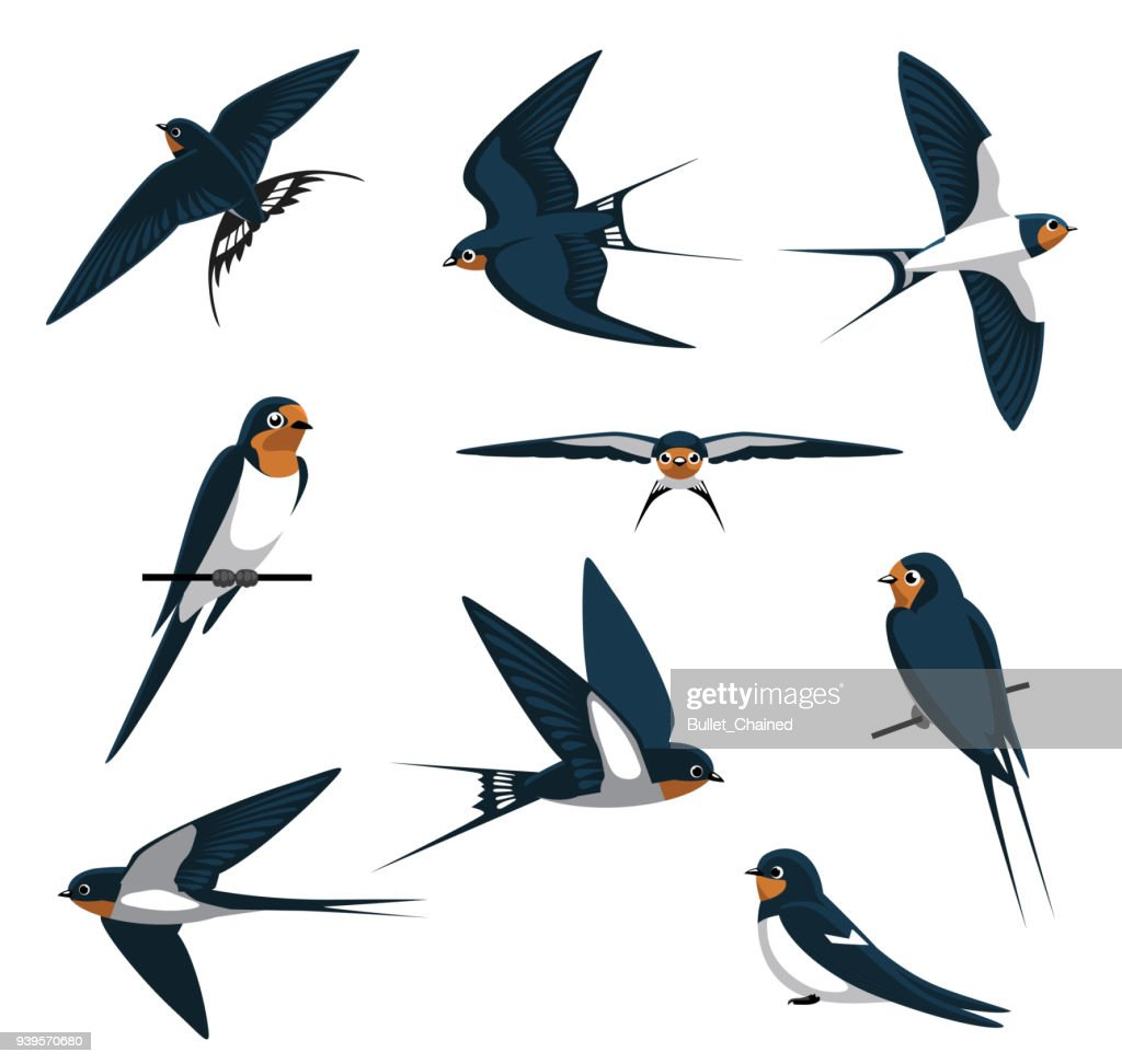 Barn Swallow Flying Cartoon Vector Illustration