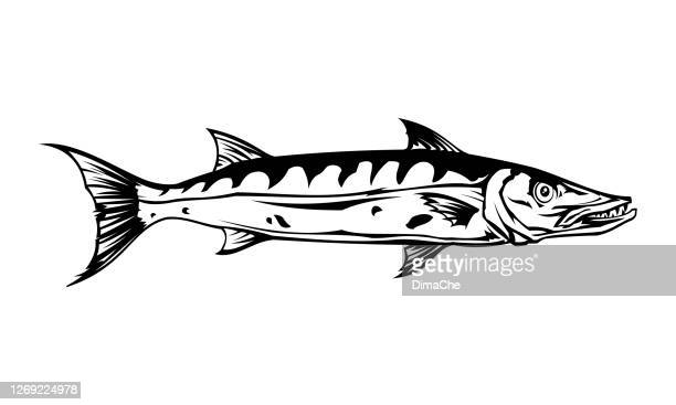 barracuda fish silhouette - cut out vector icon - tail stock illustrations