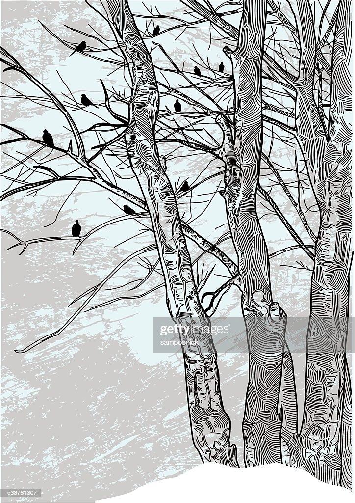 Barren Winter Trees