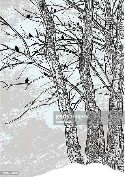 Terra brulla alberi invernali