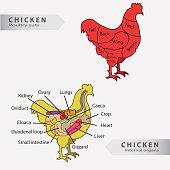 Basic chicken internal organs and cuts chart vector