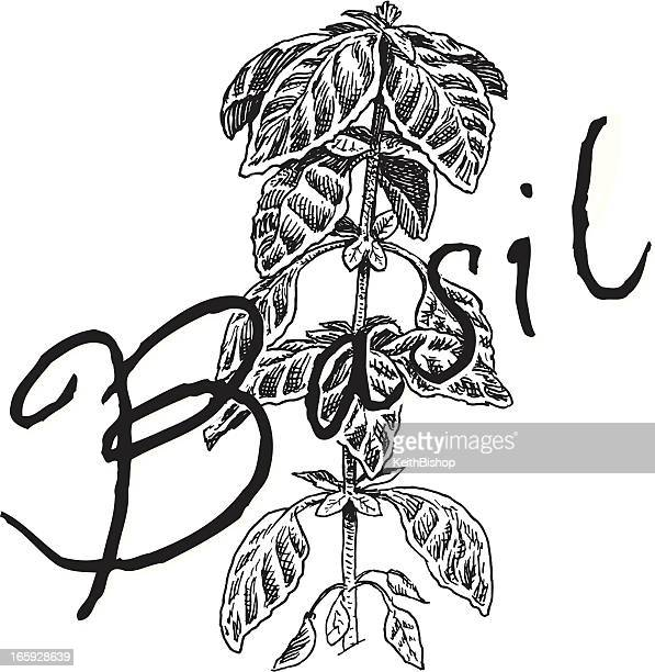 basil plant - spice - basil stock illustrations, clip art, cartoons, & icons