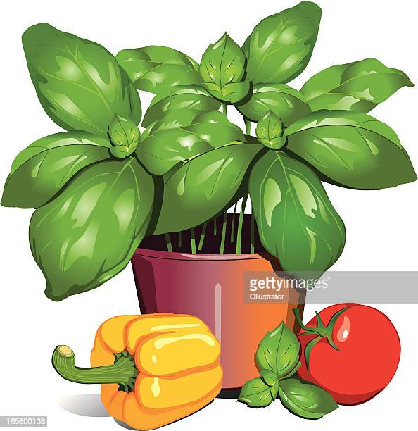 basil pot with paprika and tomato - basil stock illustrations, clip art, cartoons, & icons
