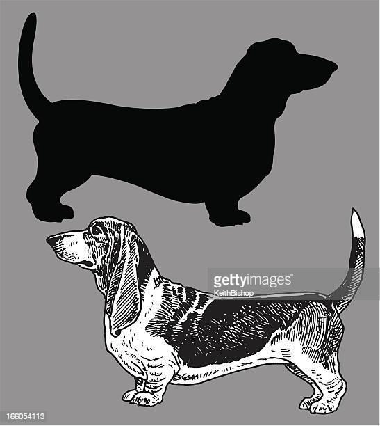 basset hound - dog, domestic pet - basset hound stock illustrations