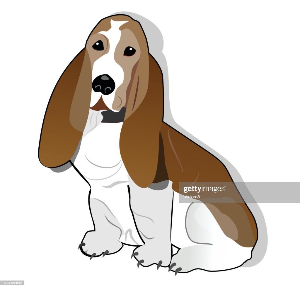 Basset hound isolated drawing on white background.